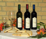 Sale production  d.o.c. Abruzzo wines